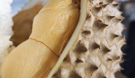 How to Choose a Ripe Durian
