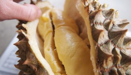 How To Open A Frozen Durian
