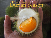 Traveler's Guide to Durian Season
