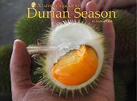 Traveler's Guide to Durian Season