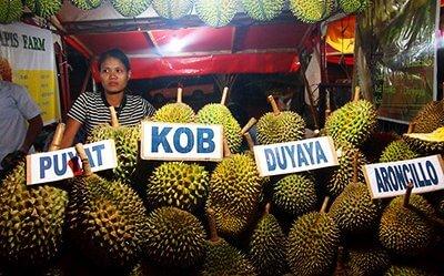 Philippines Durian Varieties Updated